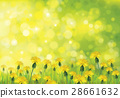 Vector  nature  background, dandelions   field. 28661632
