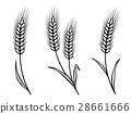wheat vector grain 28661666