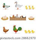 鸡 鸡肉 胆小鬼 28662970