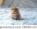 Cute lonely kitten 28666120