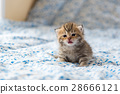 Cute lonely kitten 28666121