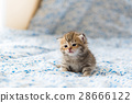 Cute lonely kitten 28666122