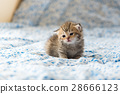 Cute lonely kitten 28666123