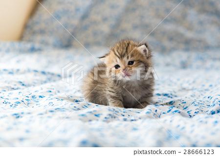 Cute lonely kitten 28666123