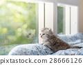 Kitten in cat cafe 28666126