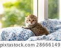 Kitten in cat cafe 28666149