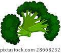isolated, white, brocolli 28668232