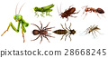 Different kinds of insects 28668245