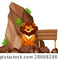 Lion sitting on rock in zoo 28668286
