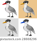 Pigeon bird on different color background 28668296