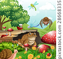Different types of insects in garden at daytime 28668335