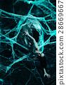 spider web cocoon 28669667