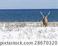 hokkaido, snowy, frozen field 28670320
