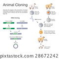 Animal cloning 28672242