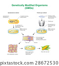 Genetically Modified Organisms. 28672530