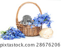 Chinchilla in basket 28676206