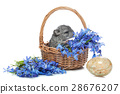Chinchilla in basket 28676207