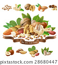 Vector illustration mix of different types nuts 28680447