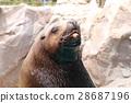 库页冷杉 北海狮 水族馆 28687196