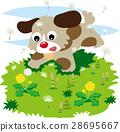 horsetail, dandelion, field 28695667