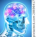 Human Internal Organic - Brain. 28696417