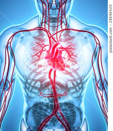 3D illustration of Heart, medical concept. 28696420