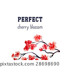 Realistic sakura blossom - Japanese red cherry 28698690