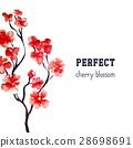 Realistic sakura blossom - Japanese red cherry 28698691