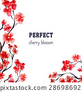 Realistic sakura blossom - Japanese red cherry 28698692