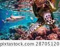 水下 鱼 珊瑚 28705120