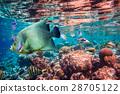 水下 鱼 珊瑚 28705122