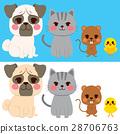 domestic pet dog 28706763