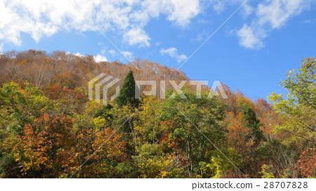 autumn, autumnal, yellow-green 28707828