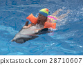 dolphin, pool, girl 28710607