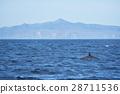 시레토코, 바다, 고래 28711536