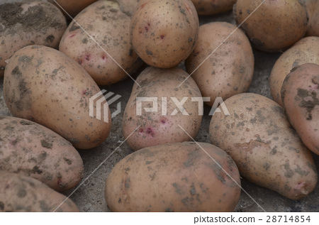 Freshly dug potatoes 28714854