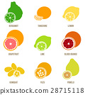 Citrus fruits vector flat set, whole fruits slices 28715118