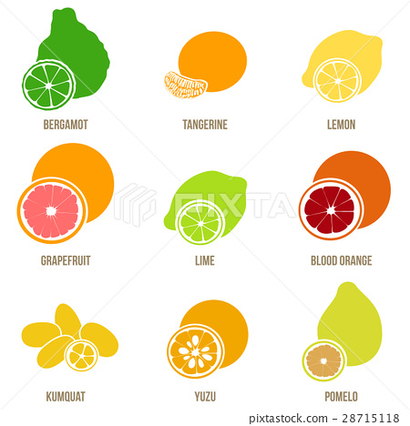Citrus fruits vector flat set, whole fruits slices 28715118