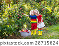 Kids picking apples in fruit garden 28715624
