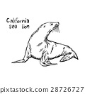 California sea lion - vector illustration sketch 28726727