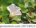 bloom, blossom, blossoms 28728025