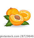 background, vector, fruit 28729646