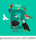 Birds with Letter B Isolated. ABC, Alphabet. 28732664