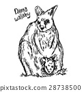 dama wallaby - vector illustration sketch hand 28738500