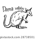 dama wallaby - vector illustration sketch hand 28738501