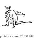 dama wallaby - vector illustration sketch  28738502