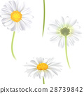flower, vector, pattern 28739842