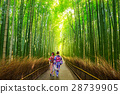 Arashiyama bamboo forest in Kyoto Japan 28739905