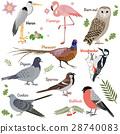 鸟儿 鸟 一组 28740083