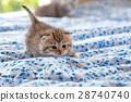 床 毯子 蓬松的 28740740